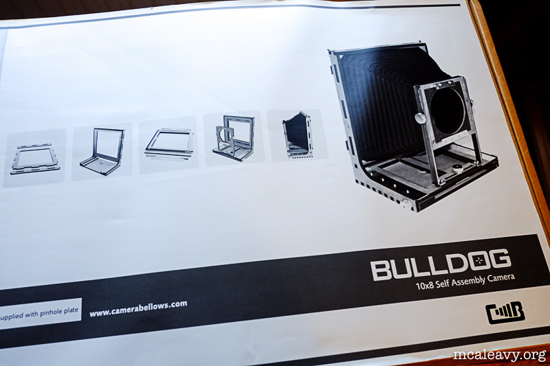 Bulldog 8×10